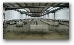 Cross Ventilated Freestall Barn  » Click to zoom ->