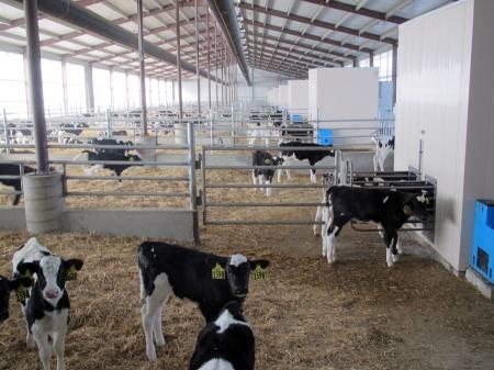 Sioux Dairy Dykstra Heifer Ranch